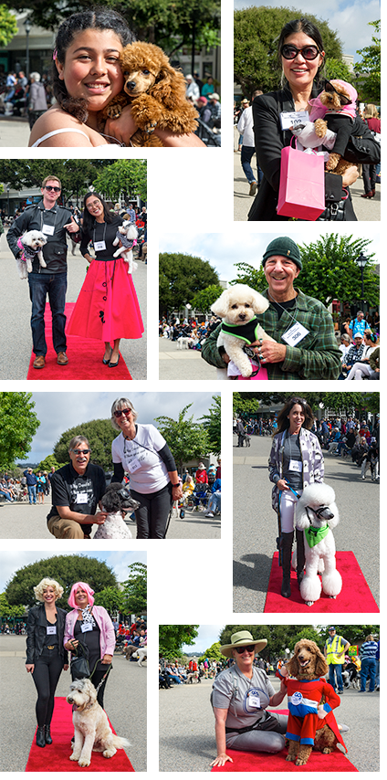 Poodle Day Parade Winners