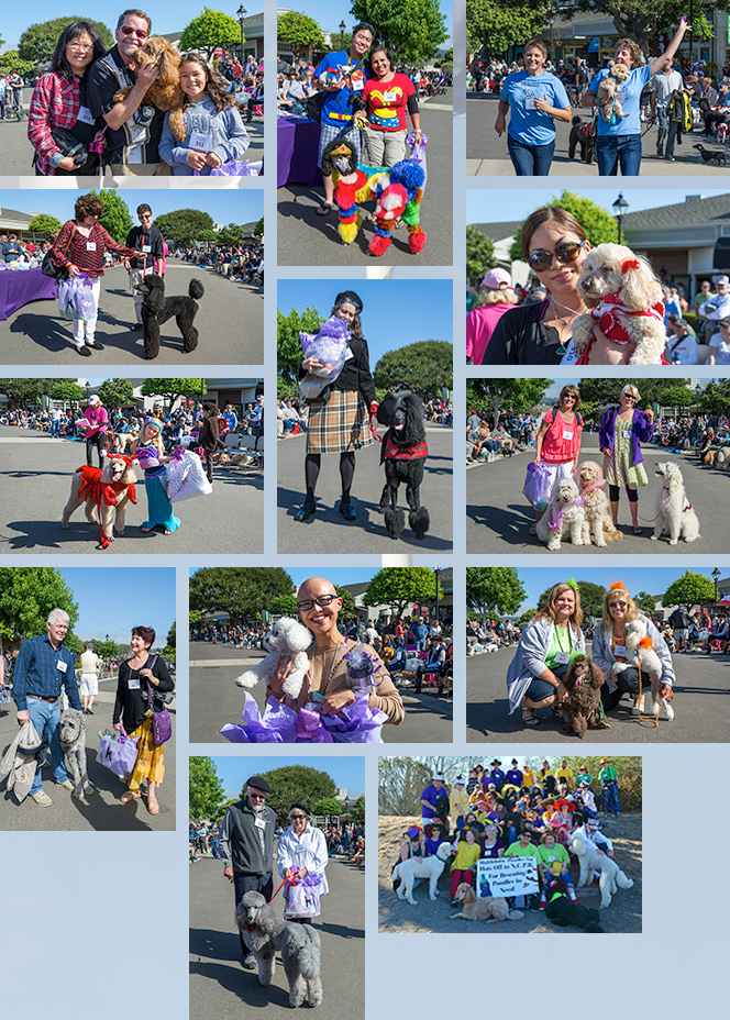 Poodle Day Parade Winners 2013